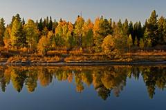 Reflect & Give Thanks (dbushue) Tags: autumn trees fall reflections river snakeriver soe 2010 grandtetonnationalpark blueribbonwinner coth gtnp oxbowbend supershot naturesgarden absolutelystunningscapes damniwishidtakenthat dragondaggerphoto coth5