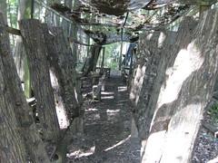 Shiitake mushroom grow room