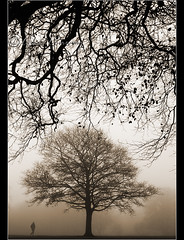 Foreboding.. (Digital Diary........) Tags: morning trees blackandwhite bw mist cold fog foreboding walker chrisconway sherdleypark