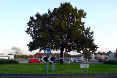 Picture of Locale Fullwell Cross