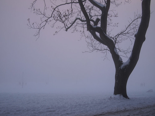 meadows in the snow and mist-6