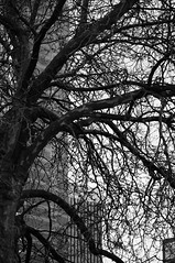 Extend (daniellih) Tags: seattle city november winter urban bw white black tree public silhouette backlight contrast harbor nikon downtown branch place market branches pike  backlighting 2010  d90   daniellih