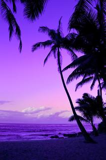 Romantic, 'Blue Hawaii'