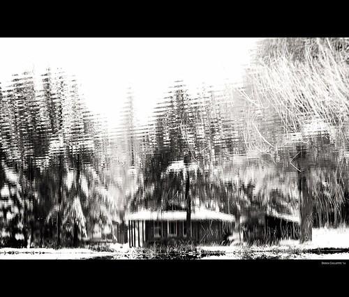 Voisinage...!!! Reflet de mon lac sauvage …!!!  Reflet d
