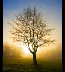..... (Digital Diary........) Tags: park sunset mist cold tree fog backlight canon freezing victoria chrisconway goodlight