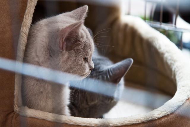 Katinas #3