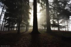 The sacred tree (Hector Prada) Tags: bosque luz magia sol bruma contraluz niebla árbol forest light fog mist backlight sun paisvasco naturaleza basquecountry nature