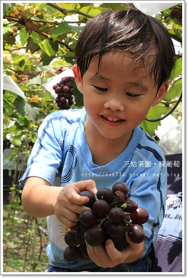 20100710_GrapePicking_0520 f