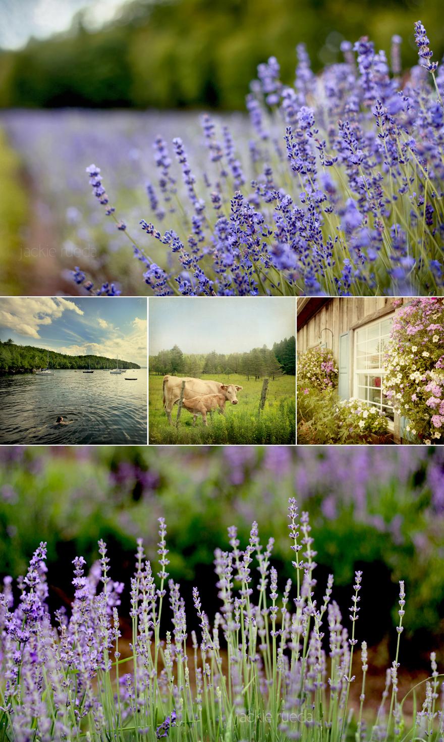 lavender mosaic