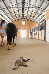 Barn (Montgomery Area Nontraditional Equestrians (MANE)) Tags: al mane pikeroad