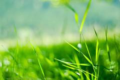Gathering light / Raccogliendo luce (bogob.photography) Tags: sun mountain grass 50mm nikon dof bokeh erba sole montagna vacanza holyday d80 gatheringlight bogob1980