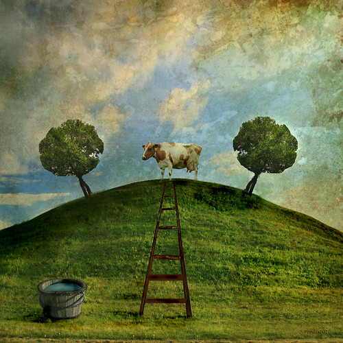 Cow on a hill..
