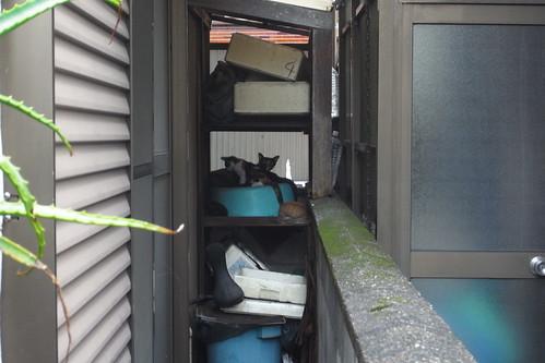 Today's Cat@2010-07-29