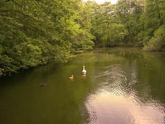 CIMG3491 Fagagna Oasi dei Quadris - one of the ponds with ducks (pinktigger) Tags: italy nature pond ducks friuli fagagna naturalreserve oasideiquadris feagne iquadri