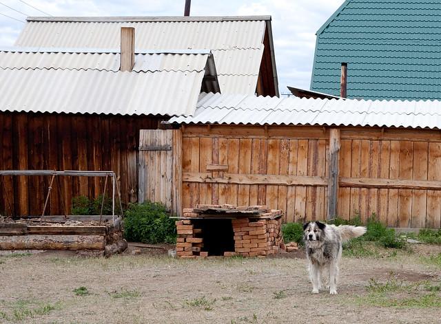 Hundehuset