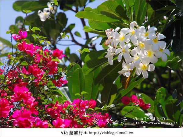 【泰國旅遊】大城之旅|泰皇的渡假聖堂~芭茵夏宮3