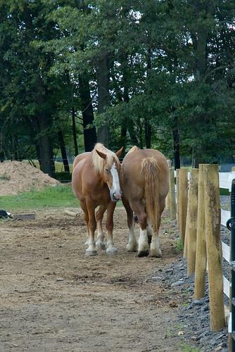Horses-10