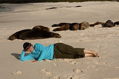 sea lions on the beach, Galapagos