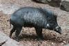 MNZoo 48 (tfangel) Tags: animals zoo minnesotazoo tropicstrail