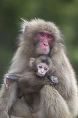 Hug (Masashi Mochida) Tags: baby monkey hug mother awaji naturesfinest coth supershot abigfave impressedbeauty rubyphotographer