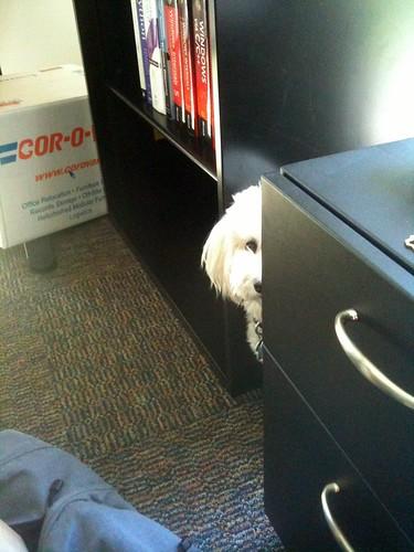 Spy Pup