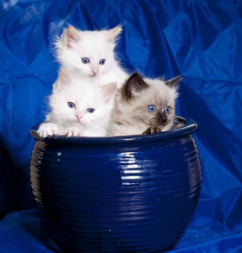[フリー画像] 動物, 哺乳類, ネコ科, 猫・ネコ, 子猫・小猫, 201009070700