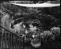 the garden II (8x10_2010_003) (mgphoto.net) Tags: bw atl 8x10 sw lf 100 rodinal 125 schweinfurt toyo 3005 jobo fomapan 20c 810g