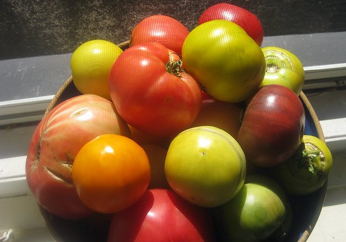 Heirloom 'Maters