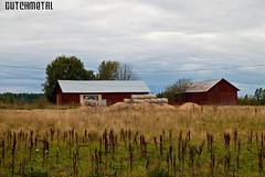Typical Finnish Farm (dutchmetal) Tags: wood rural finland farm farmland finnish scandinavia