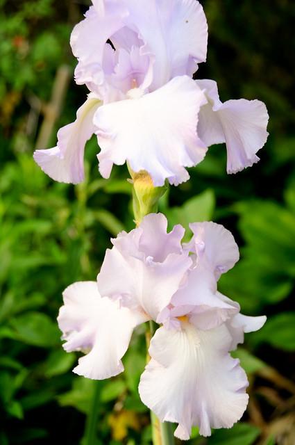 Garden etc 095
