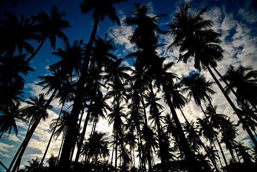 フリー写真素材, 自然・風景, 樹木, シルエット, フィリピン,