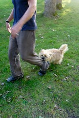Terriers favorite mode of transportation? (vbecker) Tags: terrier transportation cairn cairnterrier dailyshoot