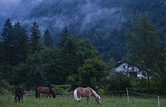 Rural Pastoralia (NatashaP) Tags: morning trees horses house mountains alps field rain fog dawn austria farm explore interestingness171 obertraun