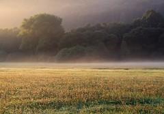 Pastoral scene (:Linda:) Tags: mist tree germany village earlymorning meadow wiese thuringia wildflower veilsdorf blumenwiese wildblumenwiese werravalley