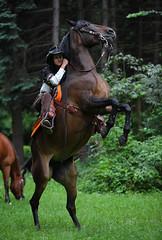 Russian cowgirl (Mikhail Kondrashov (fotomik)) Tags: horse woman girl cowboy rear rider