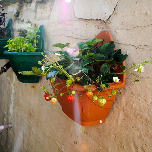 in my new garden