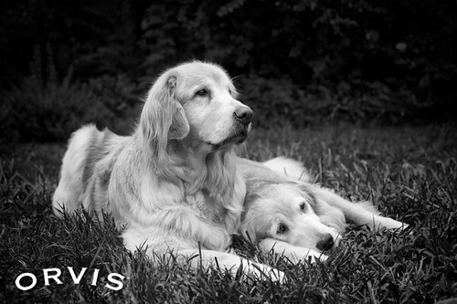 Orvis Cover Dog Contest - Tazz & Mica