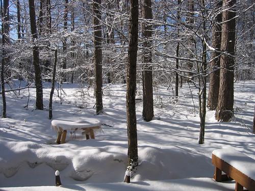 昨夜の雪 08.3.27 by Poran111