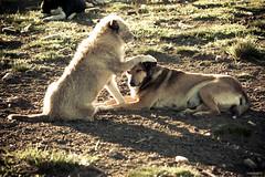 copanheiro (corbata1982) Tags: dog love co animal amigo friend friendship amor perro cachorro amizade amistad