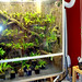 Cleaning the cool vivarium floor and drip irrigation