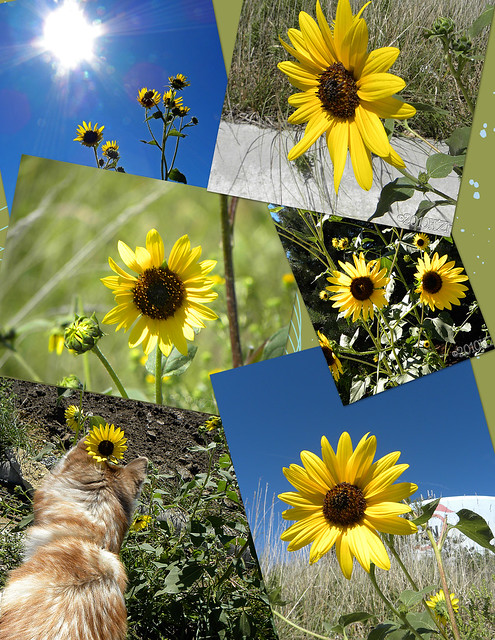 Collage6Sunflowers