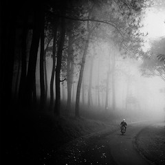 Homecoming (Hengki Koentjoro) Tags: street trees mist rain fog mystery forest motorbike jungle commute tropic layers mystic