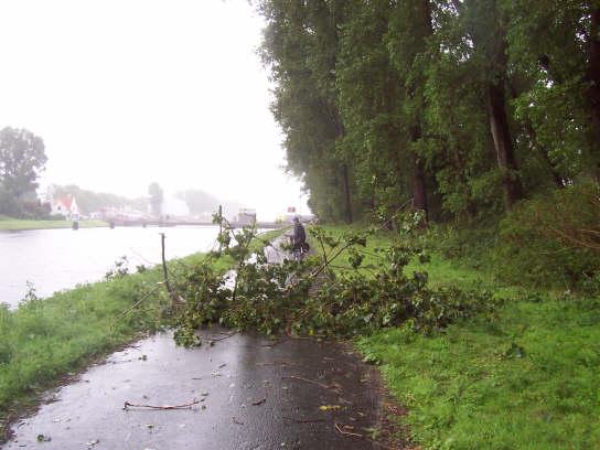 01_zeebrugge_ghent_canal_tree