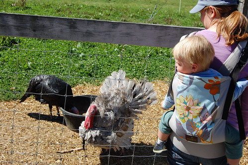 checking out the turkeys