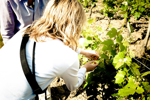 Lyza Helps in the Vineyard on Flickr
