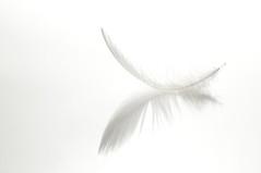 White (ICT_photo) Tags: light white reflection feather highkey ictphoto ianthomasguelphontario
