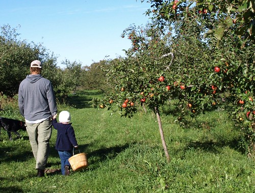 Apples10 004