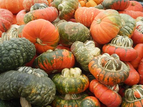 Turk Turban pumpkins