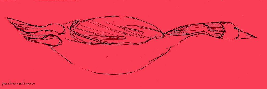 Gran pato en mar rojo