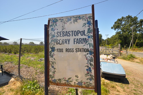 Sebastopol Berry Farm